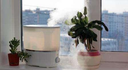 Способствование развитию комнатных растений. Благодаря увлажнению воздуха декоративные растения в доме будут быстрее развиваться, выглядеть свежее и выделять больше кислорода.