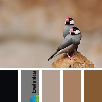 Как наконец-то выбрать цвет краски для стен