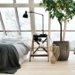 Комнатные растения в интерьере. 4 идеи декора